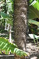 Andromeda Botanical Gardens 20.jpg