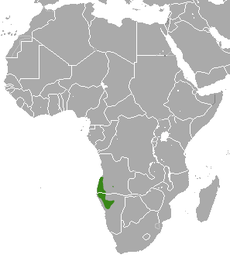 Angolan Slender Mongoose area.png