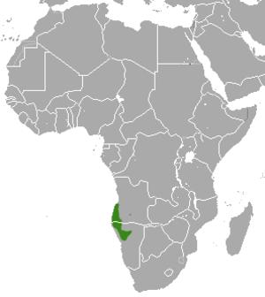 Angolan slender mongoose - Image: Angolan Slender Mongoose area