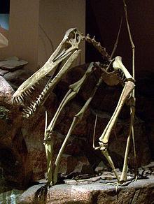 Dinosaurs Era Wikijunior:Dinosaurs/P...