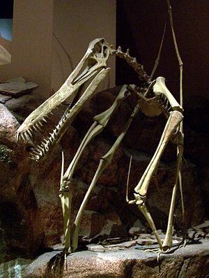 1876 in paleontology - Anhanguera.