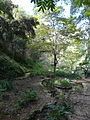 Antic jardí botànic P1250818.jpg