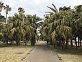 Aoshima Subtropical Botanical Garden 13.jpg