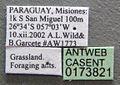 Apterostigma pilosum casent0173821 label 1.jpg