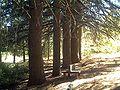 ArboretumLaAlfaguaraOc14.jpg