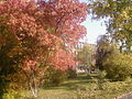 Astu barnaul autumn 2008.jpg