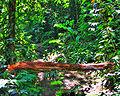Atlantic forest.JPG