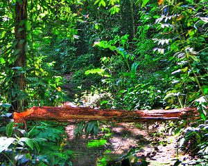 Pernambuco coastal forests - Pernambuco coastal forest habitat, in Camaragibe.