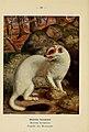 Atlas de poche des mammifères de France, de la Suisse romane et de la Belgique (Pl. 32) (6312168374).jpg