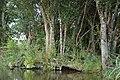 Auray (River)LeLochAmont de la Rivière d'AurayAout2018MorbihanLamiotMFL 17.jpg