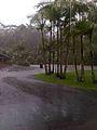 Australia Zoo Flood 2.jpg