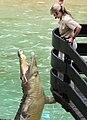 Australia Zoo Terri feeding Crocodile-1and (3706997410).jpg