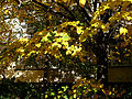 Autumn E1.jpg