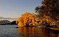 Autumn at Lake Tekapo. (12380760285).jpg