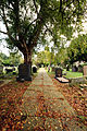 Autumn at the Graveyard.jpg