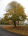 Autumn colour - Ashwood Way - geograph.org.uk - 1033630.jpg