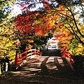 Autumn leaves in shrine.jpg