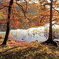 Autumn trees beside Loughrigg Tarn - geograph.org.uk - 1558846.jpg