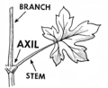 Axil diagram (PSF).png