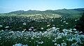 Aygehovit village, Tavush Province, Armenia.jpg