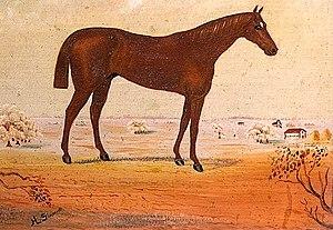 Baden-Baden (horse) - Image: Baden Baden (USA)