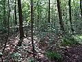 Balade en Forêt de Verrières le 20 août 2017 - 009.jpg