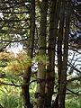 Bamboo stalks.jpg