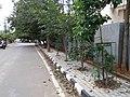 Bangalore sidewalk trees IMG20180910084944.jpg