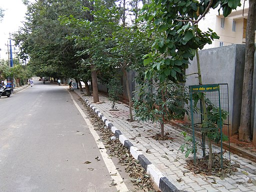 Trees planted on a sidewalk, Judicial Layout, September 2018.