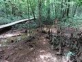 Battle Creek Cypress Swamp 27.jpg