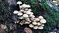 Baumberge Herbst, Moos, Pilze.jpg