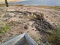 Beach at Covehead, PEI (15621858570).jpg