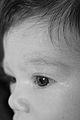 Beautiful eye (2148898387).jpg