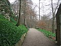 Beech Avenue, Mother Shipton's Cave, Knaresborough - geograph.org.uk - 1258445.jpg