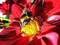 Beeinflower.jpg