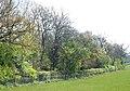 Belt of trees, Broadwell - geograph.org.uk - 1259675.jpg