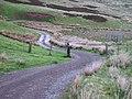 Bendy track - geograph.org.uk - 174079.jpg