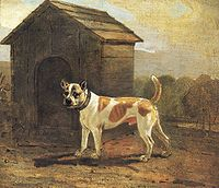 Benjamin Marshall - Dustman - Bulldog and Terrier Mix.jpg