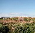 Beside the farm track - geograph.org.uk - 1024613.jpg