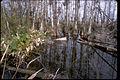 Big Cypress National Preserve BICY1060.jpg