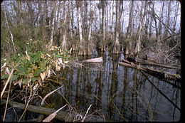 Big Cypress National Preserve BICY1060.jpg