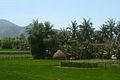 Binh Dinh farm.jpg