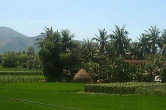 Bình Định Province - Farm in Bình Định