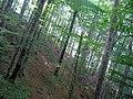 Biogradska gora4.jpg
