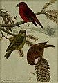 Bird lore (1908) (14564257869).jpg