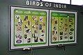Birds Of India - Life Science Gallery - BITM - Kolkata 2010-06-25 6318.JPG