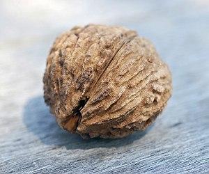 Juglans nigra - Black walnut