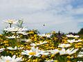 Blooms49 (9094633936).jpg