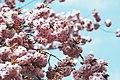 Blossom-austria-spring (Unsplash).jpg