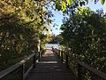 Boardwalk along Brisbane River at Sherwood Arboretum 03.JPG